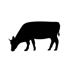 silhouette cow farm animal on grass of vector image