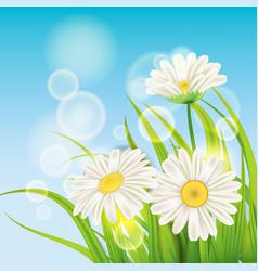 Spring daisies background fresh green grass vector