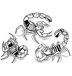 Yellow Fattail Scorpion vector image