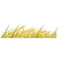 ears of wheat vector vector image