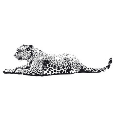 Leopard art vector