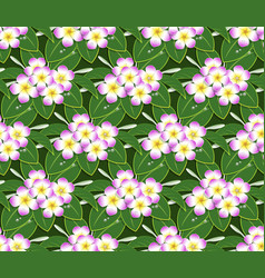 pink plumeria flower pattern seamless on green vector image