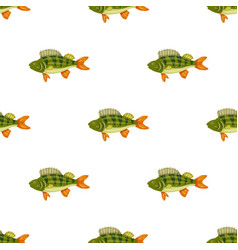 seamless pattern freshwater flat colorful perch vector image