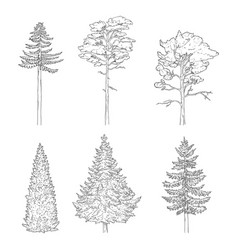 set sketch pine trees vector image