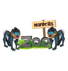 Two mandrills in the zoo vector