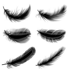 bird feather vector image