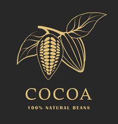cocoa beans with leaves on dark background cacao vector image