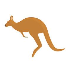 kangaroo animal zoo vector image