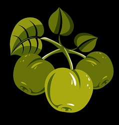 Three green simple apples with leaves ripe sweet vector