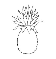 Pineapple tropical exotic fruit tasty vector