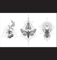 collection black and white moths and beetle vector image