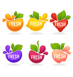 collection of fresh stylized fruits and berries vector image