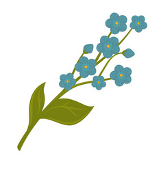 Fresh blue forget-me-not flower bundle isolated vector