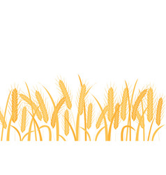 Golden wheat ears on stalks horizontal border vector