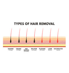 hair removal concept shaving depilation cream vector image