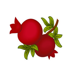 pomegranates on a branch with leaves vector image