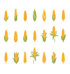 set of corn with green leaves vector image