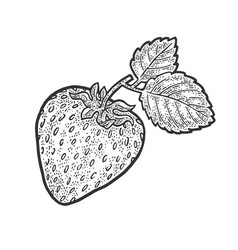 Strawberry berry fruit sketch vector