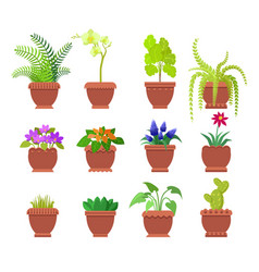 cactus collection of plants vector image