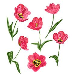decorative tulip flowers set vector image