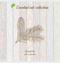 pure essential oil collection grand fir wooden vector image