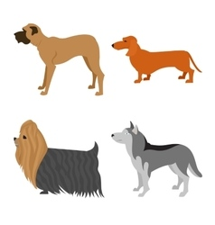 Dogs flat set vector image vector image