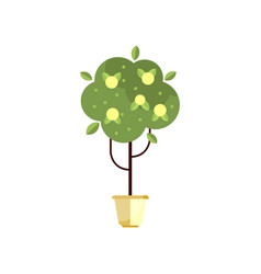 tree in pot with green foliage and fruits indoor vector image vector image