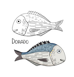 hand drawn fish dorado black and white and color vector image