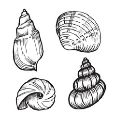 sea shell set vector image