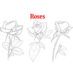 Set of rose flowers vector