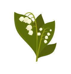 twigs of close up lily of the valley isolated vector image
