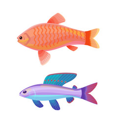 Aquarium gold and wrasse fish isolated on white vector