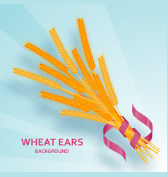 Cartoon background with wheat ears and ribbons vector