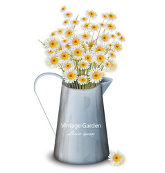 Chamomile flowers in a pot vase spring vector