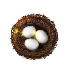 eggs bird nest poultry embryo isolated birdnest vector image