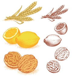 Grains lemons walnuts vector