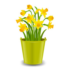 Narcissus in pot vector