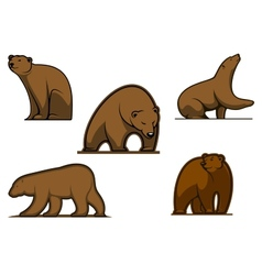 Brown colored bear characters vector image vector image