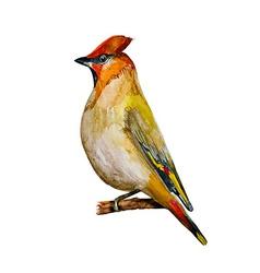 watercolor painting bird vector image vector image