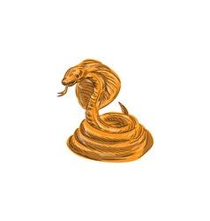 Cobra Viper Snake Coiled Drawing vector image vector image