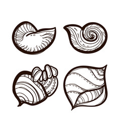 collection various seashells coloring book vector image