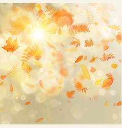 gold autumn bokeh background with maple autumn vector image