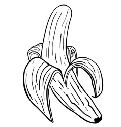 peeled banana vector image