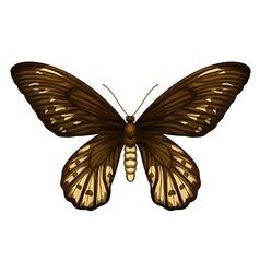 Queen Alexandras birdwing vector