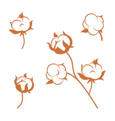 set cotton plant flowers isolated on white vector image
