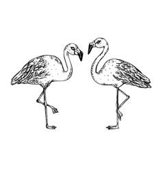 flamingo bird engraving vector image