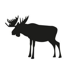 Moose or elk with big horns isolated on white vector