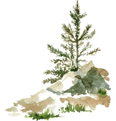 pine trees and rocks vector image