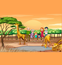 Scene with people looking at giraffes at zoo vector