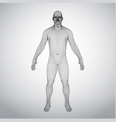 Wire frame human body polygonal 3d model on white vector